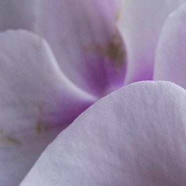 petals up